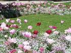 Symphonie en rose - Sylviane MAGNER