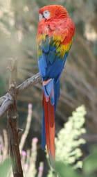 Perroquet - Médéric Usubelli