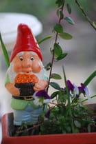 le petit nain de jardin - Genevieve LAPOUX
