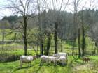 Veaux et vaches - Marie-Anne GERBE