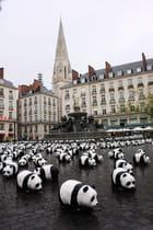 1600 pandas - Stéfan Le Dû