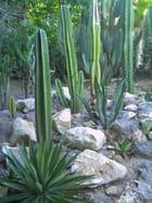Plantes grasses - Genevieve LAPOUX