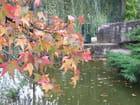 Feuilles d automne - Patrice PLANTUREUX