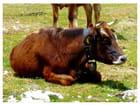 Le repos du bovin - Luca Di Muzio