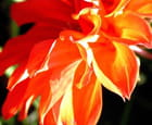 Fleur feu - Huguette Roman