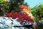 Les couleurs de l'automne - Floréal IBAÑEZ