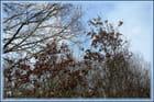 Alors, que je marchais, dans le silence de la forêt, soudain j'entendis un bruit ... - Jacqueline DUBOIS