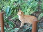 Petit chat roux errant - Isabelle TARAS