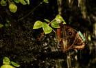 Papillon au repos - ludovic blandin