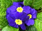 Petit bouquet romantique - Huguette Roman