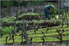 Jardinier au travail - Jean pierre TOLOMIO