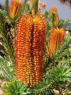 Fleur - georgette bironneau