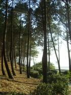 Baie d'Arcachon - NATHALIE HESME