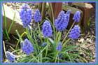 Un petit air de printemps dans le jardin - 2 - Jacqueline DUBOIS