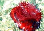 Fleur de mer - André-Marie Nef
