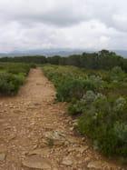 Randonnée route des Crêtes - Sylviane CHAUVIN