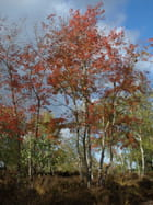 Rouge d'automne - Olivier HABERT