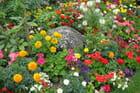 Couleurs éclatantes d'un parterre de fleurs - Jacqueline DUBOIS
