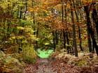 Chemin d'automne par didier bicking sur L'Internaute
