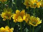 Fleurs jaunes - Patrice PLANTUREUX