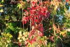 Rouge d\'automne - Philippe DOUCET