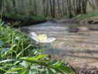 Une fleur en sous-bois par Patrick JASSIONES sur L'Internaute