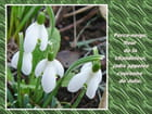 Pour vous tous, les premières fleurs de mon jardin - Jacqueline DUBOIS