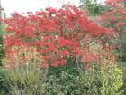 Arbuste d automne par Patrice PLANTUREUX sur L'Internaute