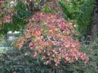 Feuilles d automne par Patrice PLANTUREUX sur L'Internaute