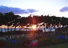 coucher de soleil à travers les arbres par Huguette Roman sur L'Internaute