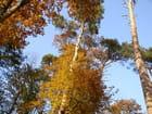 Couleurs d'automne et ciel bleu - ANNE-MARIE DUFFET