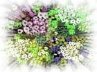 Bouquet du printemps - Claudia ZAMORANO PINTO