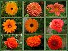 Orange, mélange de jaune et de rouge - Jacqueline DUBOIS