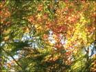 Couleur d'automne au jard - Francine ANCEL