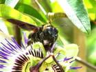 La belle et l'insecte - Marcel Capelle