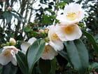 Bouquet de printemps par Malou TROEL sur L'Internaute