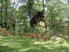 Le chien vol - julie logerais