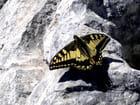 Papillon montagnard par Andre VOLPATO sur L'Internaute