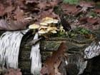 Champignons d\'automne par didier bicking sur L'Internaute
