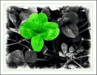 Trèfle à 4 feuilles pour votre bonheur...MM - Murielle Maurage