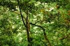 Vue d en haut - Patrice PLANTUREUX