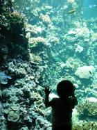Visite de l'aquarium - sandra sumon