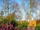 Le jard en automne - Francine ANCEL