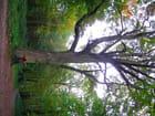 Mon arbre mon amour - Ayman Alsawah