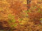 Feu d'automne - Catherine Schroeder