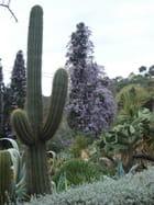 Jardin botanique de blanes - jacques riviere