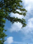 ciel de juillet - nadine legrand
