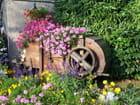 Automne au jardin du Roy - maryse rozerot