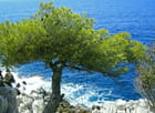 Le pin et la mer - Marie-Claude COULOT