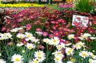 Salon des plantes - La ronde des jardins 2 - Jacqueline DUBOIS